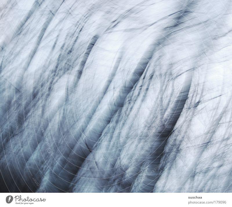 vorbote Natur schön Baum blau ruhig Wald dunkel kalt Herbst Stil Traurigkeit Wetter Umwelt Idylle gruselig Surrealismus
