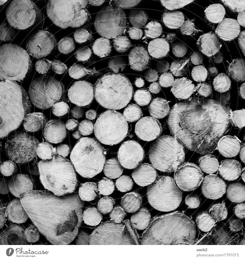 Schnittmuster Umwelt Natur Herbst Baum Baumstamm liegen Zusammensein rund viele schwer Verschiedenheit geschnitten Stapel Schwarzweißfoto Außenaufnahme