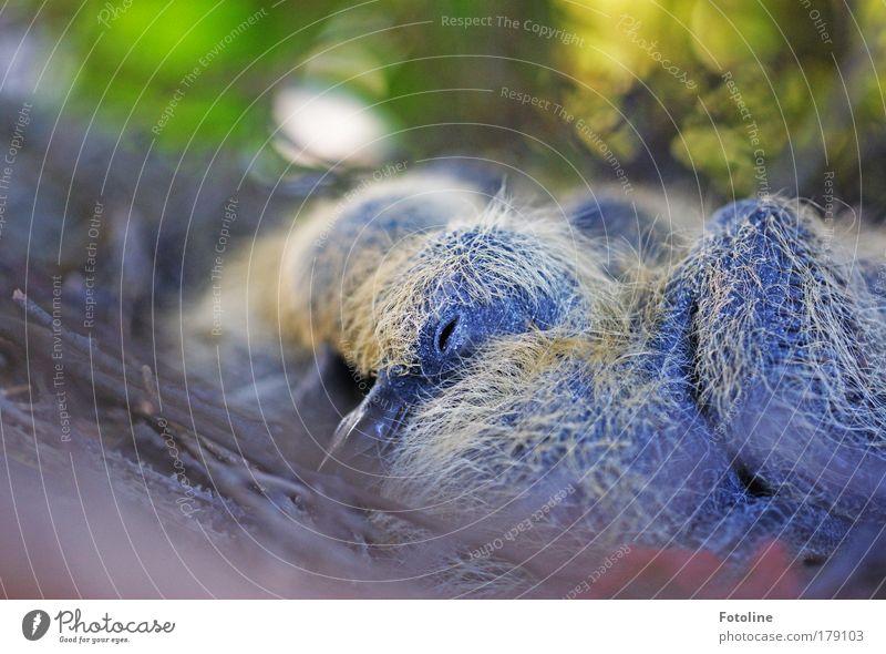 Taub-en Natur Pflanze Sommer Blatt Haus Tier Herbst Frühling Luft Vogel Umwelt schlafen Sträucher Dach Feder liegen