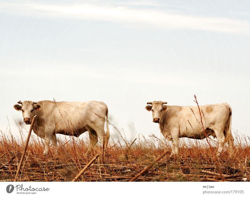 Spain's next Top Model - Das Finale Ferien & Urlaub & Reisen Tier ruhig Ferne Feld Kraft Mahlzeit Ernährung Macht Gelassenheit Blick Lebensmittel Bioprodukte