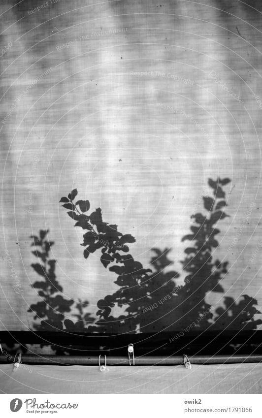 Empathie Pflanze Baum Blatt Bewegung Idylle authentisch berühren Kunststoff Zweig zerbrechlich Wildpflanze Zeltplane