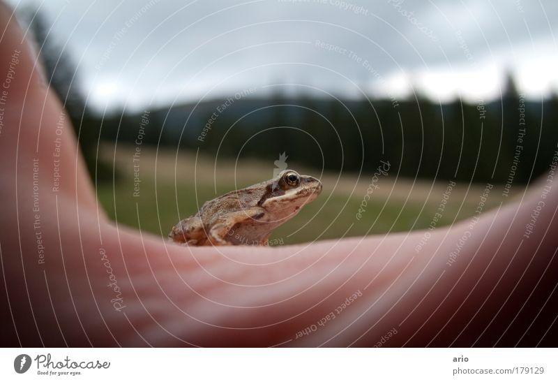 Bitte Küssen! Hand Tier springen Wildtier Frosch krabbeln