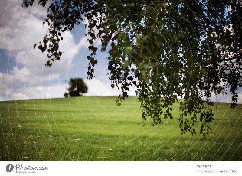Landscape Natur schön Baum Pflanze Ferien & Urlaub & Reisen Sommer ruhig Ferne Umwelt Landschaft Leben Wiese Gefühle Freiheit Bewegung träumen