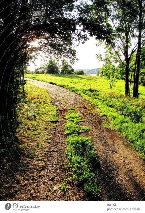 Alte Straße Natur schön Himmel Baum Sonne grün Pflanze Sommer Wald Wiese Gras Wege & Pfade Landschaft hell braun Küste