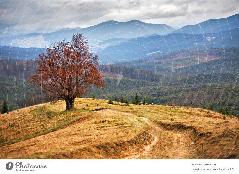 Einsamer Baum in den Karpatenherbstbergen schön Berge u. Gebirge Umwelt Natur Landschaft Himmel Wolken Herbst Unwetter Nebel Regen Gras Grünpflanze Wiese Wald