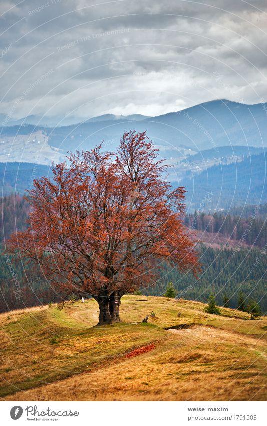 Einsamer Baum in den Herbstbergen Himmel Natur Ferien & Urlaub & Reisen grün schön Landschaft rot Wolken Wald Berge u. Gebirge Umwelt Straße gelb Wiese