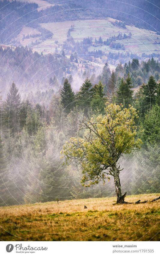 Nebelige Karpatengebirgsszene des Herbstes. Fall Regen und Nebel Himmel Natur Sommer grün schön Baum Landschaft Wolken Wald Berge u. Gebirge Umwelt Wiese