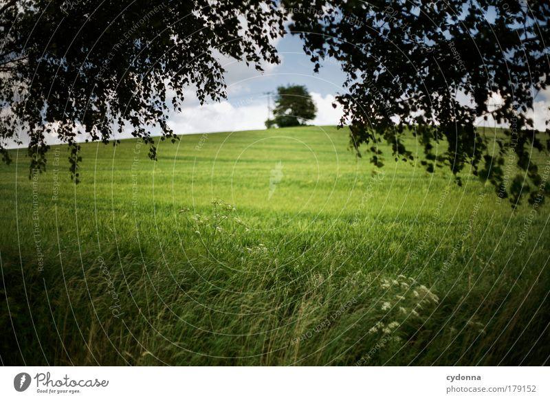 Landscape I Natur schön Baum Pflanze ruhig Erholung Umwelt Landschaft Leben Wiese Freiheit Bewegung Traurigkeit Luft träumen Zufriedenheit
