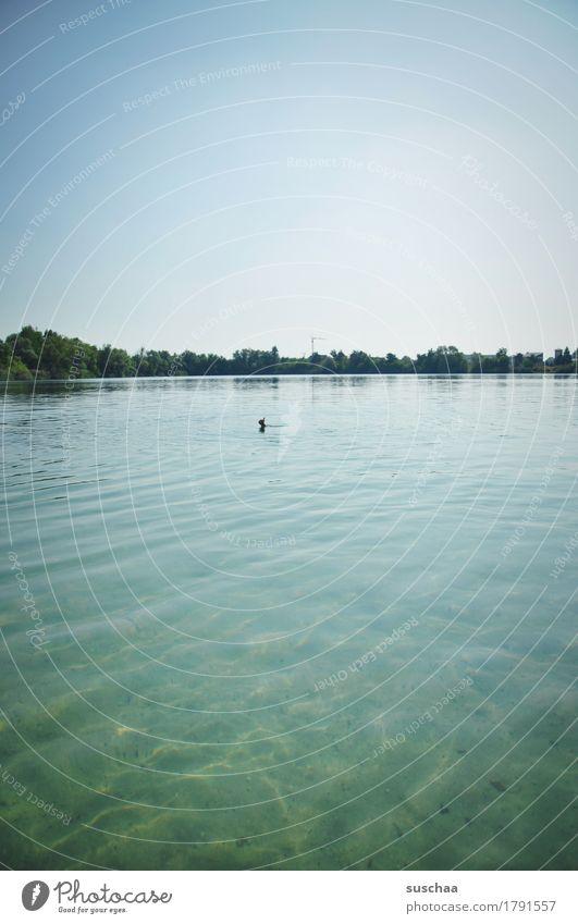 im see sommer natur draussen warm wasser grün wasseroberfläche hand zeichen