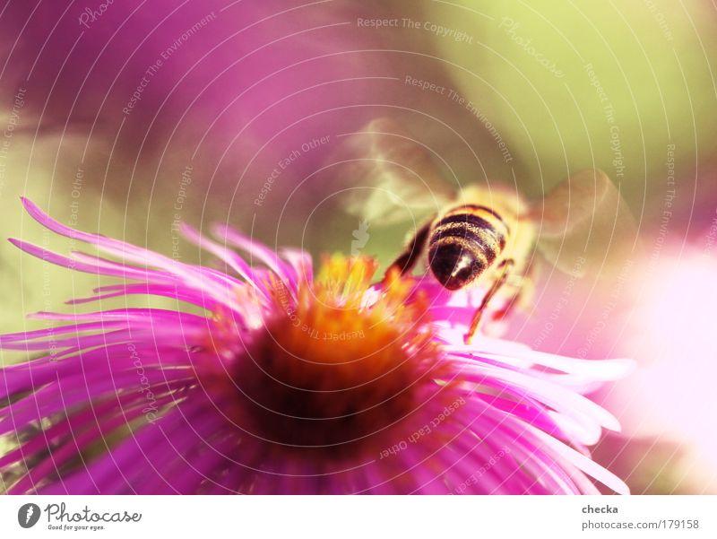 Abflug Farbfoto mehrfarbig Außenaufnahme Makroaufnahme Menschenleer Textfreiraum oben Abend Schwache Tiefenschärfe Umwelt Natur Pflanze Tier Frühling Sommer