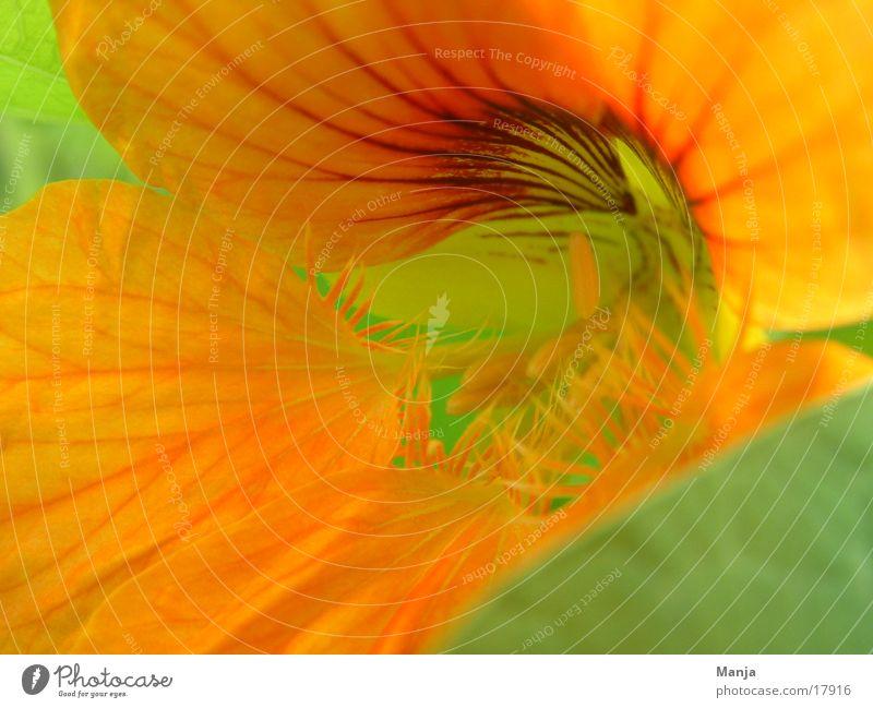 Im Garten 2 Blume grün gelb Blüte orange