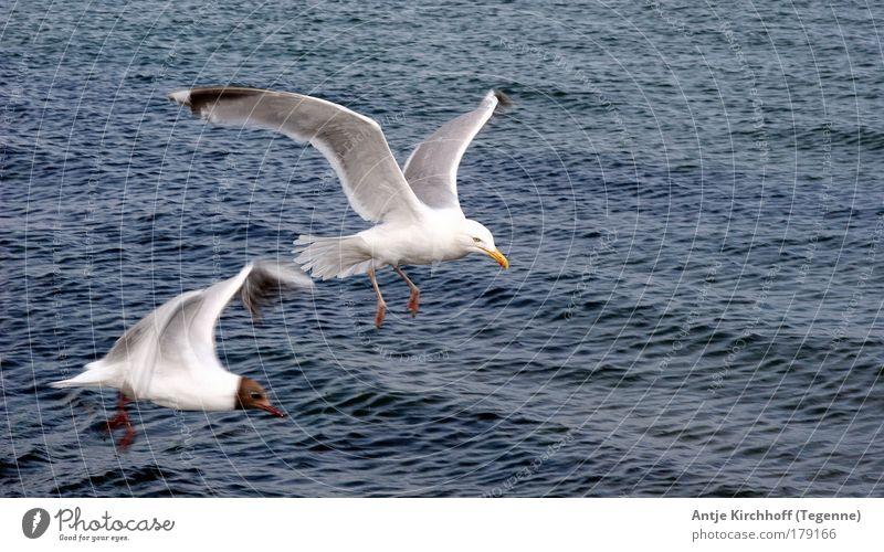 Frei wie der Wind Farbfoto Außenaufnahme Luftaufnahme Textfreiraum rechts Tag Tierporträt Natur Wasser Sommer Schönes Wetter Wellen Küste Nordsee Ostsee Meer