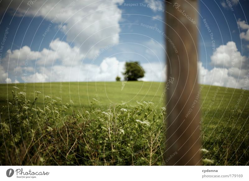 Wegweiser Natur schön Baum Pflanze Wolken ruhig Umwelt Landschaft Leben Wiese Freiheit Erde Luft träumen Zufriedenheit Perspektive