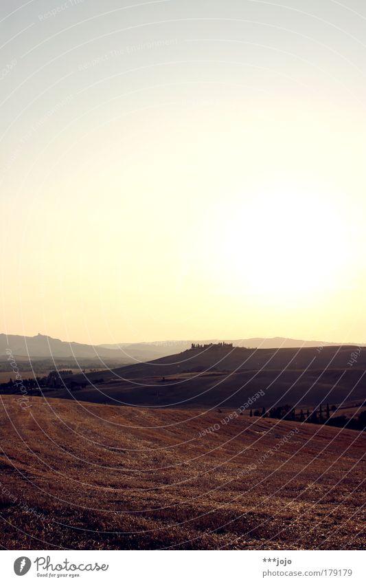 siamo spiriti. Natur Pflanze Sommer Ferien & Urlaub & Reisen Ferne Wärme Landschaft Feld rosa Umwelt Erde Rasen violett Italien Hügel