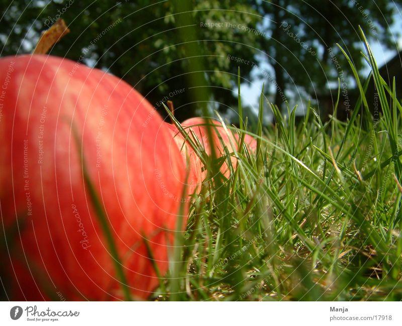 Apfelparade Himmel Baum grün rot Wiese Gras Rasen Apfel