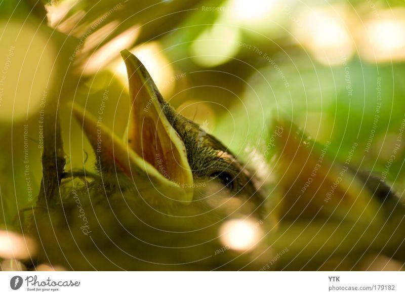 HUNGER!!! Natur grün Pflanze Baum Tier Umwelt Wärme Tierjunges Gefühle Vogel gold Beginn Sicherheit Schutz Neugier Appetit & Hunger