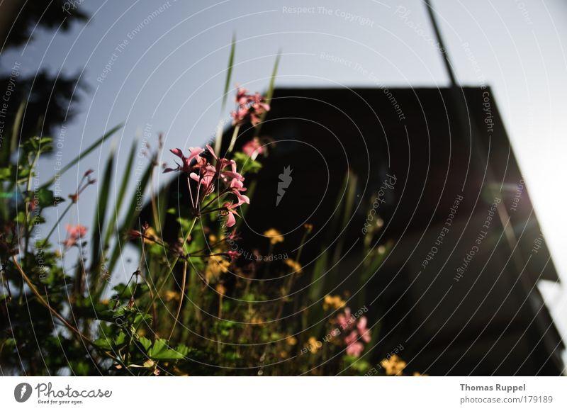 Blümchen vorm Haus Farbfoto Außenaufnahme Menschenleer Tag Sonnenlicht Sonnenstrahlen Gegenlicht Schwache Tiefenschärfe Froschperspektive Totale Weitwinkel