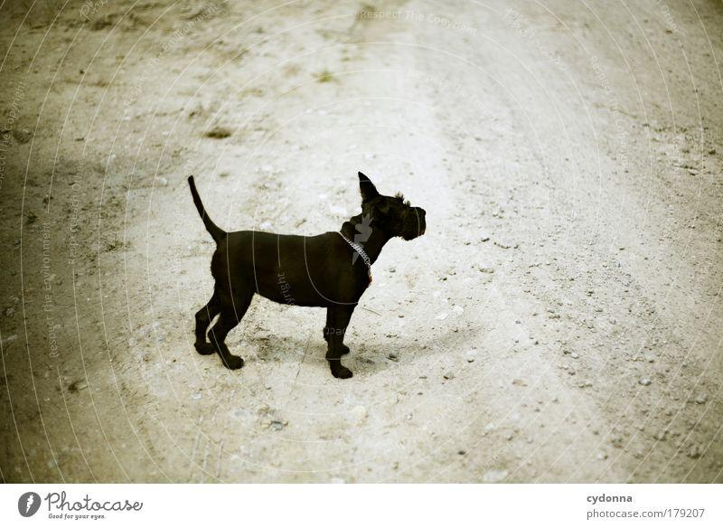 Expedition Hund Natur schön Tier ruhig Umwelt Leben Freiheit Bewegung Wege & Pfade träumen Energie Spaziergang Neugier Vertrauen Idee