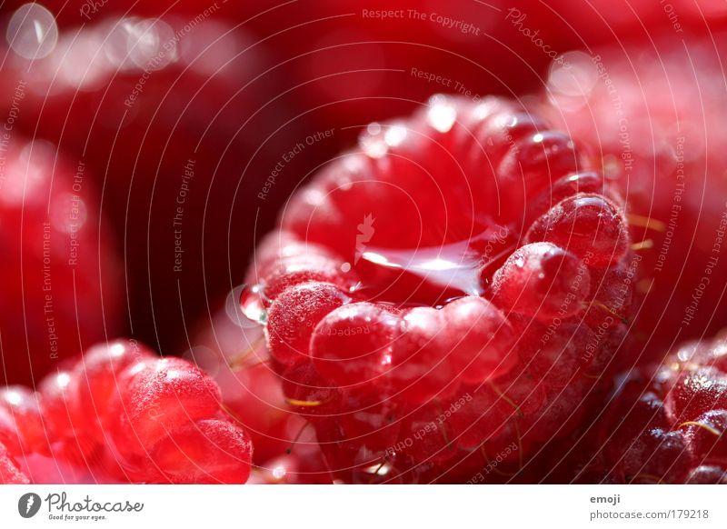jetzt regnet's Himbeeren Farbfoto Außenaufnahme Nahaufnahme Detailaufnahme Makroaufnahme Schwache Tiefenschärfe Frucht Ernährung Bioprodukte