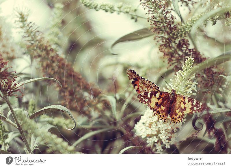 Et je rêve des papillons Farbfoto Gedeckte Farben Textfreiraum links Textfreiraum oben Tag Tierporträt elegant exotisch harmonisch Sinnesorgane Duft Umwelt