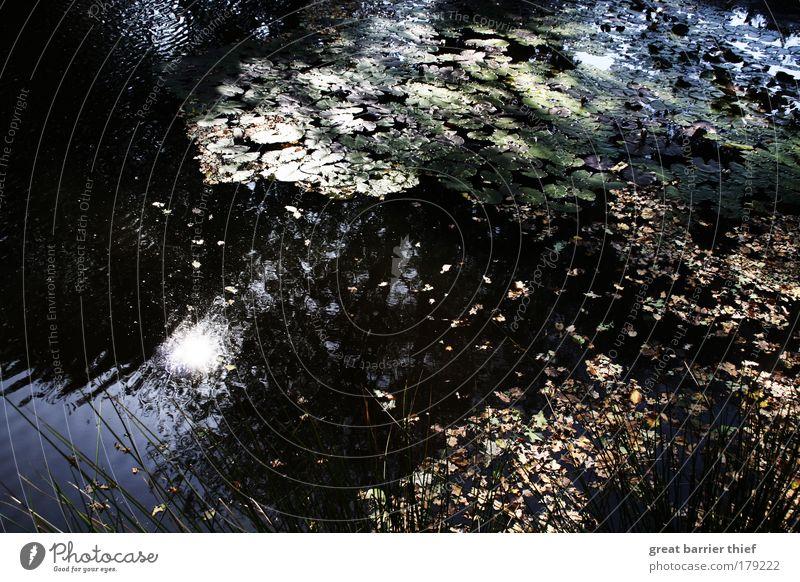 Spieglein Spieglein ... Natur Wasser Sonne blau Pflanze Sommer Tier Herbst träumen Romantik Schönes Wetter Teich Moor Sumpf Inspiration
