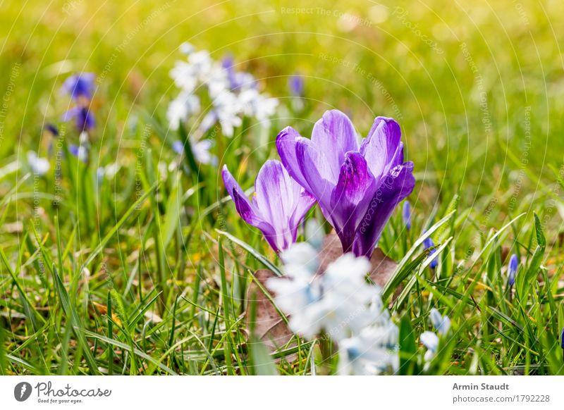 Frühling Lifestyle Leben harmonisch Ostern Natur Pflanze Blume Gras Wiese Blühend Wachstum Freundlichkeit frisch positiv saftig grün Stimmung Lebensfreude
