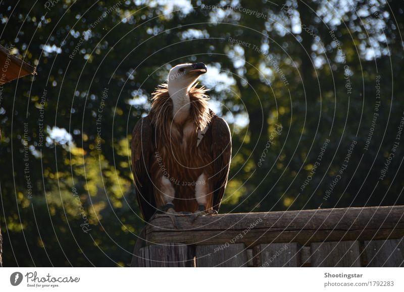 Geier 2 Tier Tod Vogel Wildtier Kraft Flügel Zoo