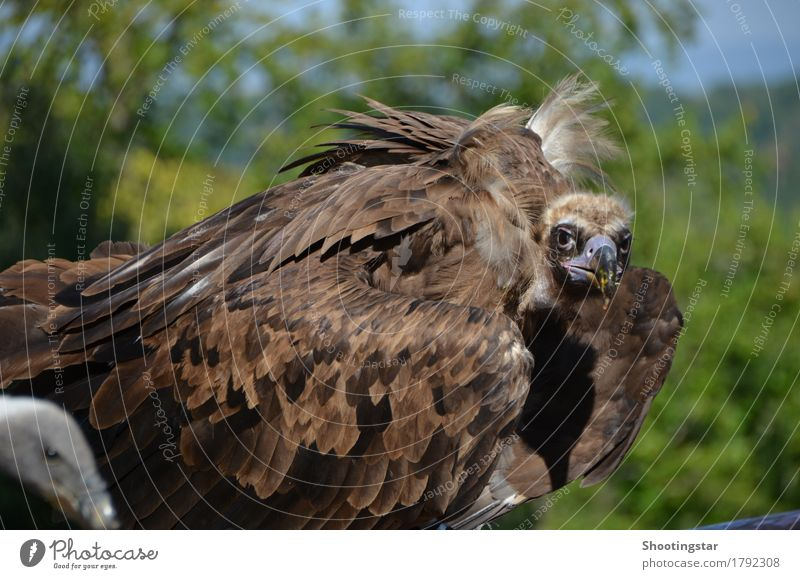Geier 3 Natur Tier braun Vogel Wildtier Appetit & Hunger