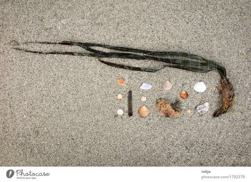 Steife Brise Freizeit & Hobby Sommer Sommerurlaub Strand Sand Pflanze Blatt Algen Sammlung Muschel Super Stillleben Stein klein natürlich Kreativität Natur