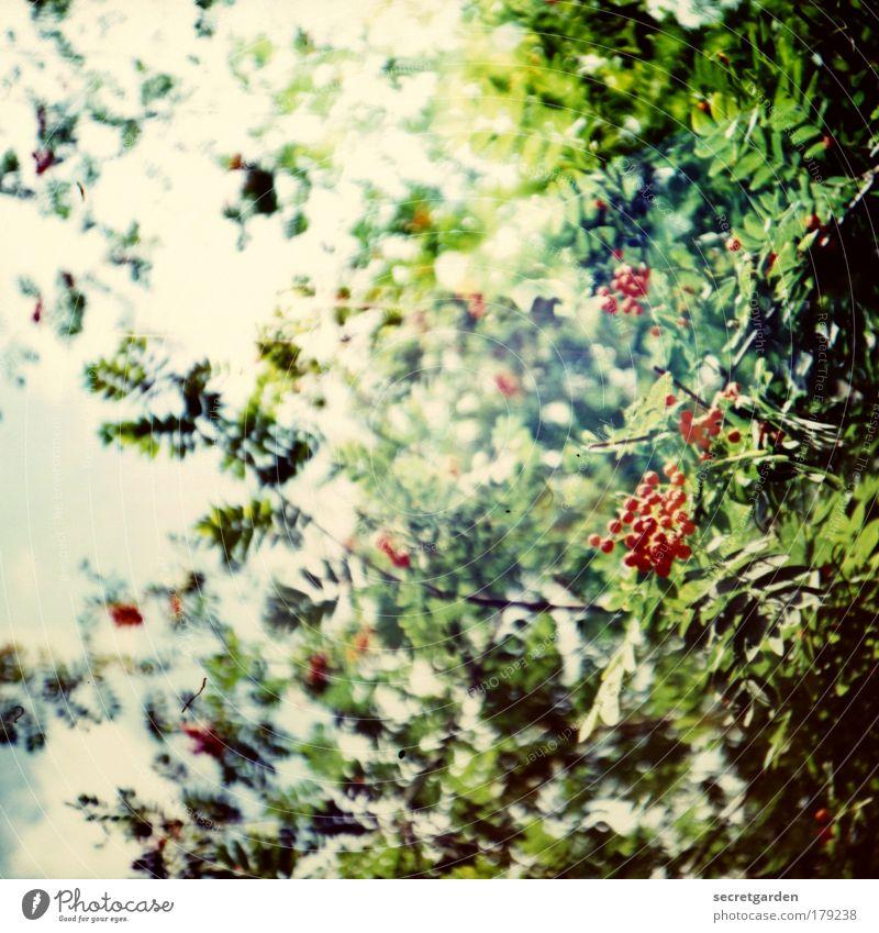 kindheitserinnerungen mit opa Natur schön Beeren grün Pflanze rot Sommer Wald Blüte Lomografie Traurigkeit Park Heilpflanzen Umwelt Frucht Wachstum