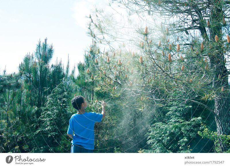 Baum Junge Wald Freiheit blau Kindheit Glück Licht Schatten grün Erde Kiefer Spielen Reflexion & Spiegelung Farbe Sommer Sonne Staub Pollen Samen Allergie