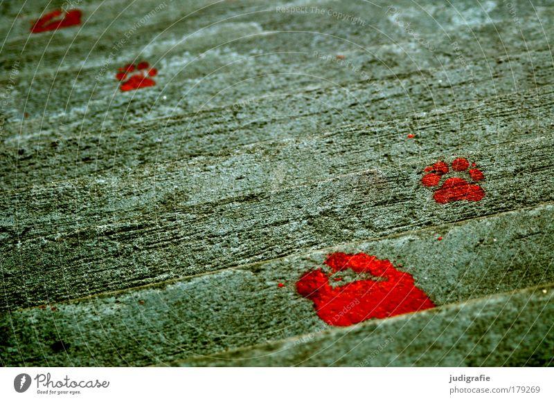 Spuren Mensch rot Tier Leben Fuß Kunst Beton Treppe Zeichen Fußspur Kunstwerk Farben und Lacke