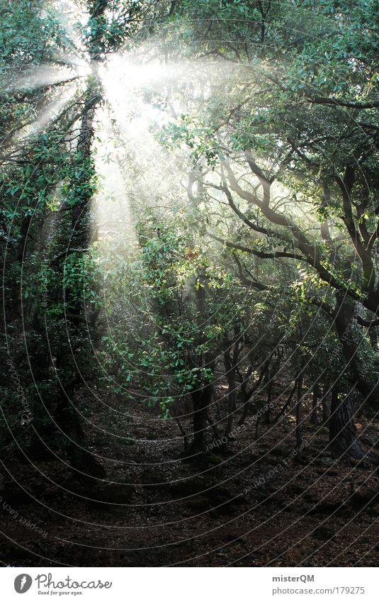 Meeting the Gods. Natur Einsamkeit Sonnenaufgang Wald dunkel Landschaft Fantasygeschichte Horizont Nebel gruselig Licht entdecken Urwald Ewigkeit Idee