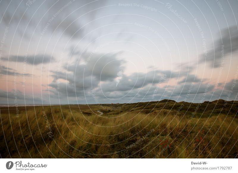 Inselfeeling Kunst Umwelt Natur Himmel Wolken Horizont Sonnenaufgang Sonnenuntergang Sonnenlicht Sommer Herbst Wetter Schönes Wetter Wind Pflanze Gras Sträucher