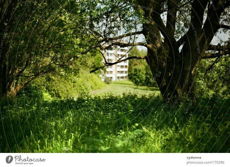 Zurücklassen Natur schön Baum Haus ruhig Umwelt Landschaft Leben Freiheit Bewegung Gras Traurigkeit träumen Zeit Zufriedenheit Perspektive