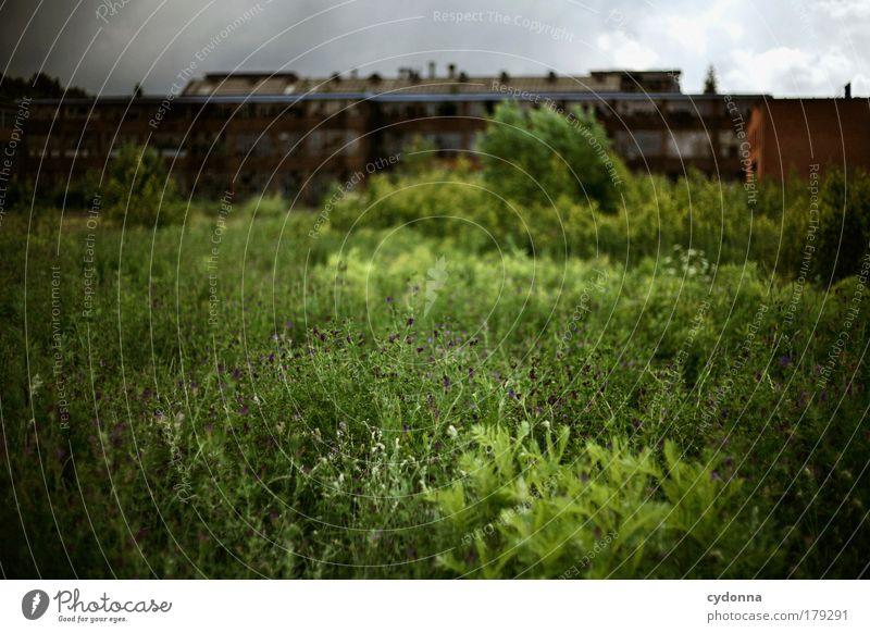 Altindustrie Natur schön Einsamkeit Leben dunkel Wiese Tod träumen Traurigkeit Landschaft Umwelt Zeit Perspektive Zukunft Wandel & Veränderung Vergänglichkeit