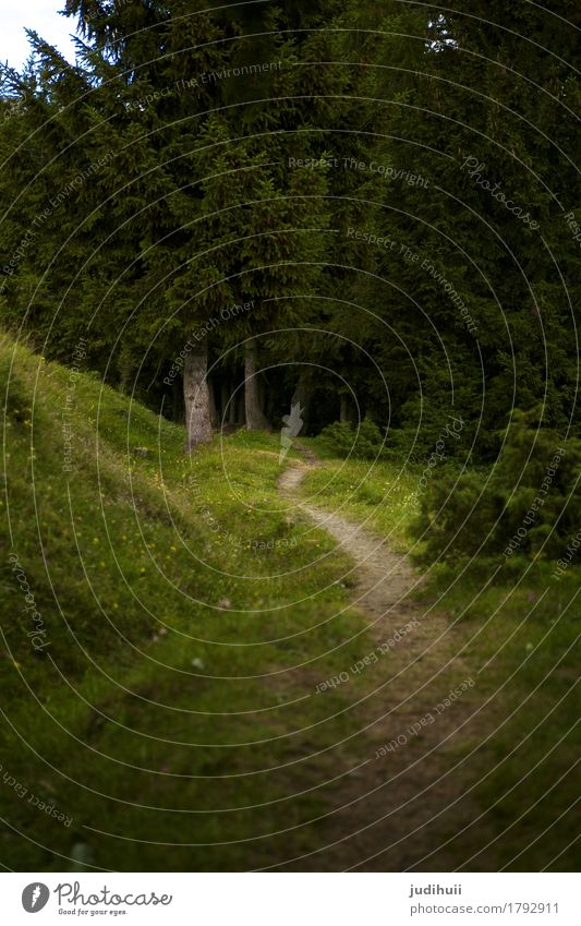 Trampelpfad Natur Pflanze grün Baum Landschaft Tier ruhig Wald Umwelt Wege & Pfade Wiese Stimmung gehen wandern Abenteuer bedrohlich