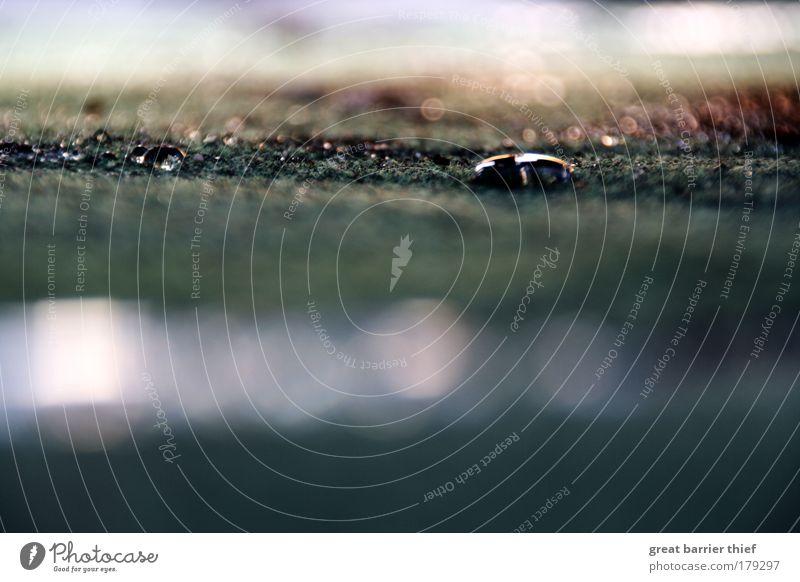 Tropfenfamilie im Gezeitenstrom Wasser Sommer ruhig Erholung Herbst grau braun warten Wassertropfen nass Zeit nah Boden unten Urelemente Makroaufnahme