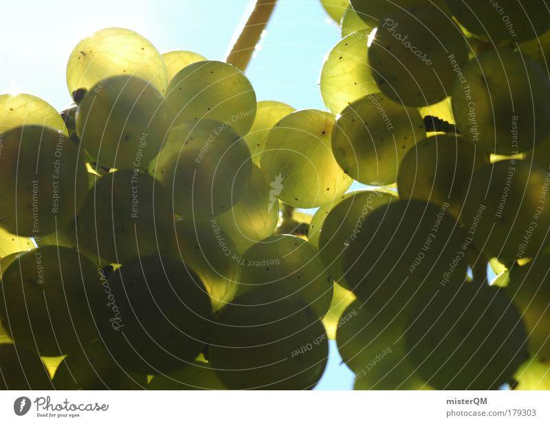 Trauben. grün Ernährung Leben Herbst Gesundheit Deutschland Frucht viele Wein genießen Ernte Restaurant reif Alkohol Gastronomie Vitamin
