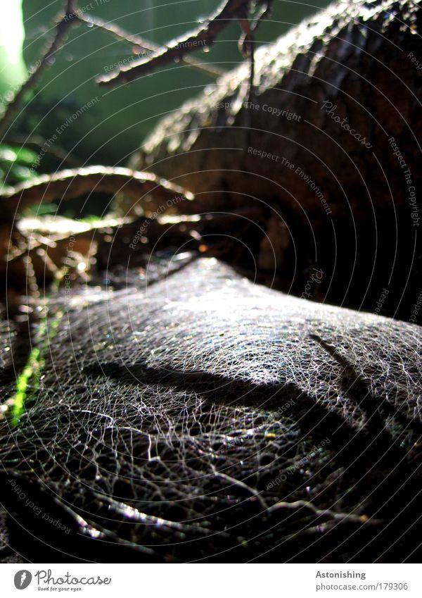vernetzter Wald Natur weiß grün Baum Pflanze Sonne Tier schwarz Umwelt Landschaft dunkel Wiese Gras hell braun Erde