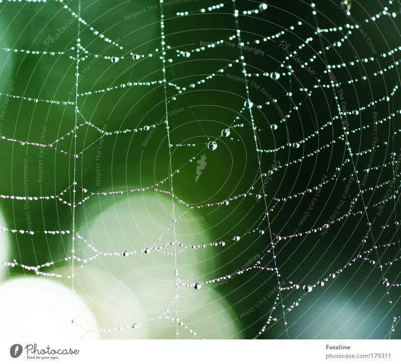 Einkaufsnetz Natur Wasser grün Baum Pflanze Tier Umwelt Wiese Park Wetter nass Wassertropfen Schönes Wetter Spinne