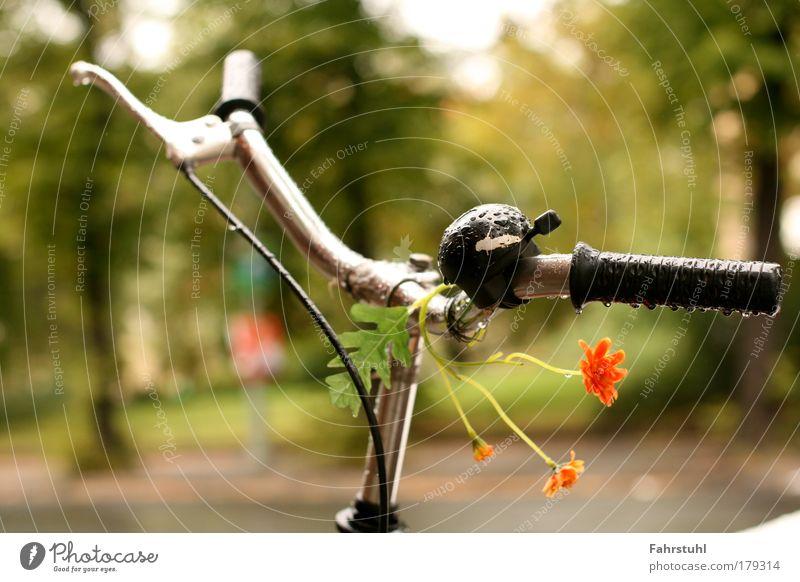 Lenkerblumen Straße außergewöhnlich Verkehr Mobilität