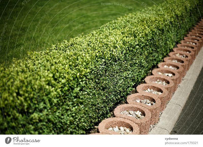 Vorsicht, frisch geschnitten! Natur schön Pflanze Leben Garten Ordnung Design ästhetisch Lifestyle Sträucher einzigartig Idylle Kreativität Idee Leidenschaft