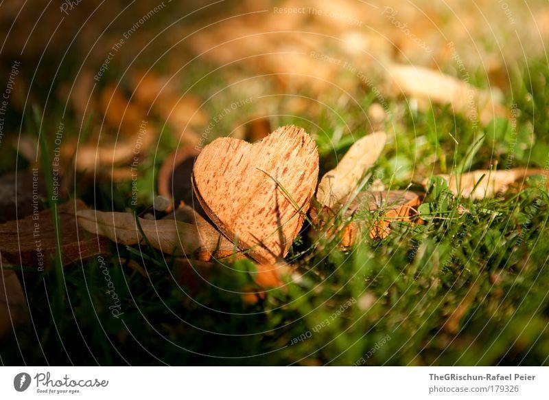 My heart will go on Natur schön grün Pflanze Liebe Gefühle Gras Berge u. Gebirge Holz braun Herz Umwelt ästhetisch Coolness Romantik authentisch
