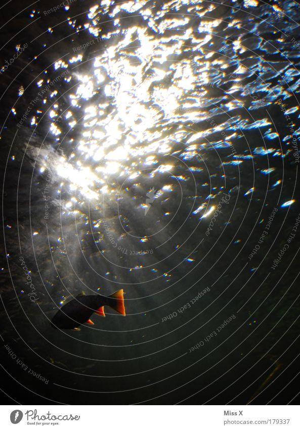 komm ins Licht Farbfoto Unterwasseraufnahme Menschenleer Textfreiraum links Textfreiraum rechts Textfreiraum oben Textfreiraum Mitte Hintergrund neutral