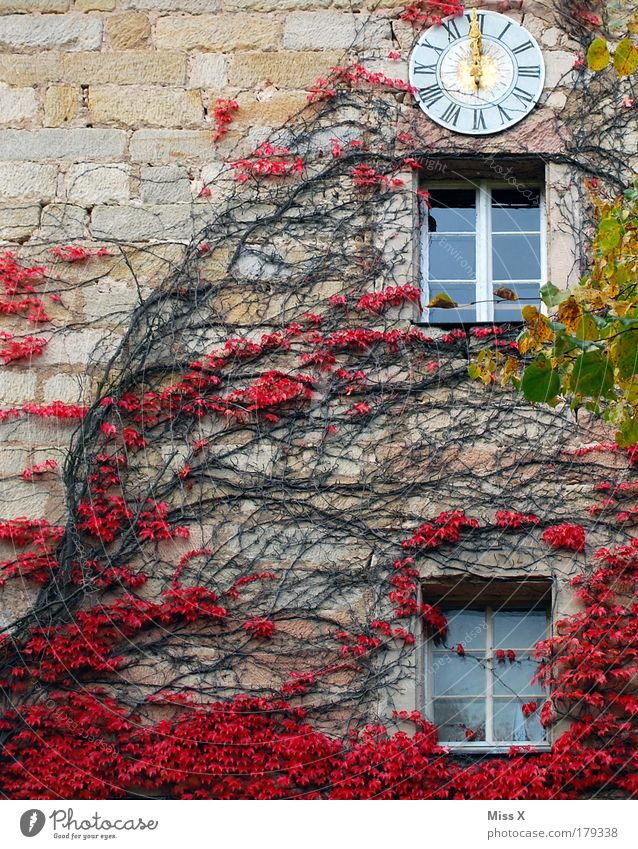 Eremitage Natur Pflanze rot Blatt Haus kalt Herbst Wand Garten Mauer Park Ausflug Wachstum Kirche Sträucher Uhr