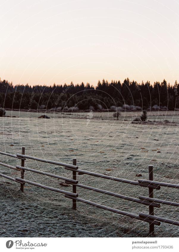 Himmel Natur grün Landschaft ruhig Winter Wald schwarz Umwelt kalt braun orange rosa Feld Erde Klima