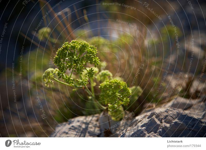 für Feen und Gnome grün Pflanze ruhig Ernährung Tier Herbst Stein Sand Küste Gesundheit Umwelt Felsen frisch ästhetisch Wachstum Frieden