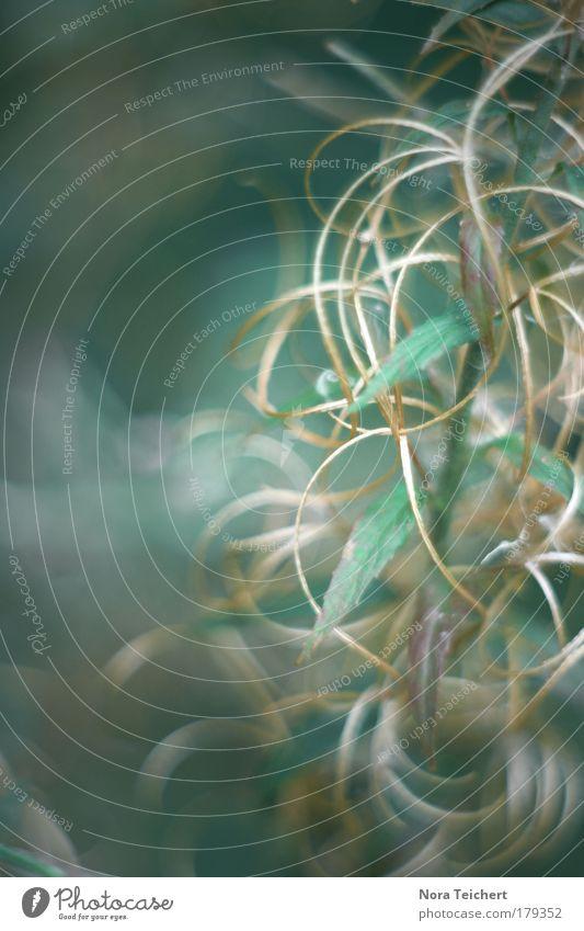 Verwirrung Natur blau schön Pflanze Sommer Tier Umwelt Landschaft Herbst Bewegung Frühling Blüte träumen Park Stimmung Zeit