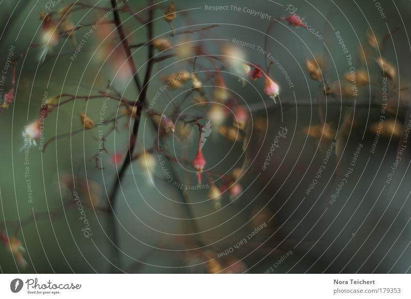 Traumland Farbfoto Gedeckte Farben Außenaufnahme Nahaufnahme Detailaufnahme Makroaufnahme Experiment abstrakt Menschenleer Abend Schatten Unschärfe